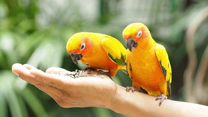 Cute Parrot Wallpapers Group (39 )